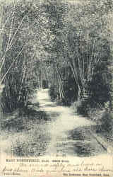 Birch Road Postcard