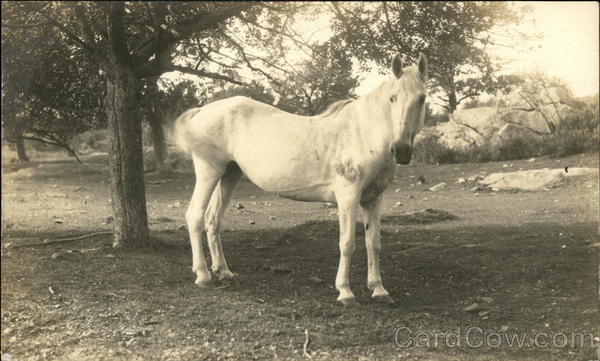 Photo of a horse Foster Rhode Island Horses