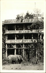 Elephant By Building