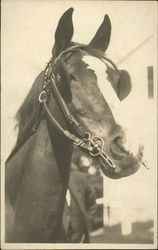 Portrait of a horse with blinders