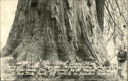 The Oldest Living Thing, General Custer Sequoia