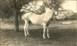 Photo of a horse