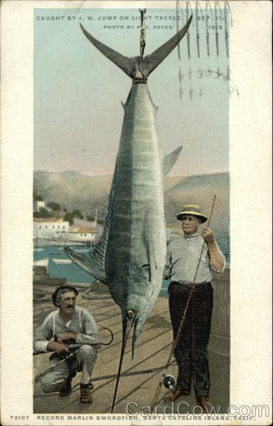 Record Marlin Swordfish Santa Catalina Island California