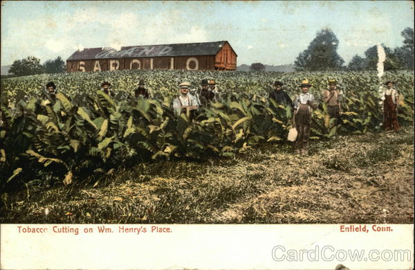 Tobacco Cutting on Wm. Henry's Place Enfield Connecticut