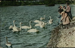 Feeding the Swans, Jamaica Pond