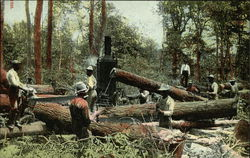Logging in the Dismal Swamp