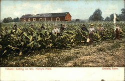 Tobacco Cutting on Wm. Henry's Place Postcard
