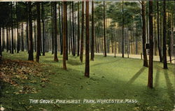 The Grove, Pinehurst Park Postcard