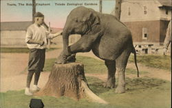 Toledo Zoological Gardens - Toots the Baby Elephant