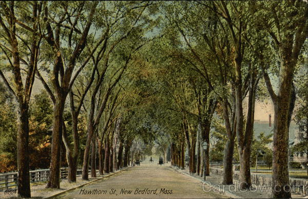 Tree Lined Hawthorn Street New Bedford Massachusetts