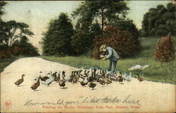 Feeding the Ducks, Middlesex Fells Park