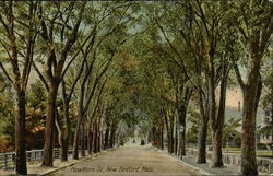 Tree Lined Hawthorn Street