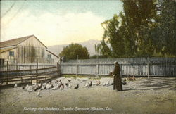 Santa Barbara Mission - Feeding the Chickens