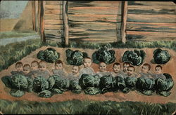 Thirteen Babies in a Cabbage Patch