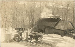 Bringing maple sap to the sugar shack in the early 20th century