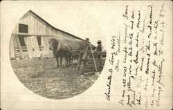 Horse and plow on a farm in the early 20th century