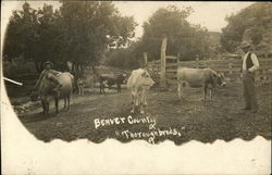 Thoroughbreds - Beaver County