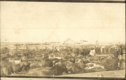 Cattle farm in the early 20th century