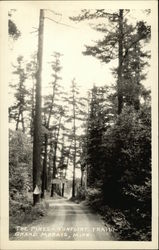 The Pines on the Gunflint Trail Postcard