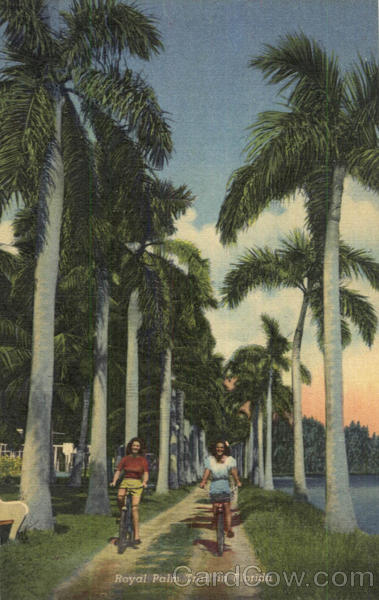 Royal Palm Trail In Florida Scenic Bicycles