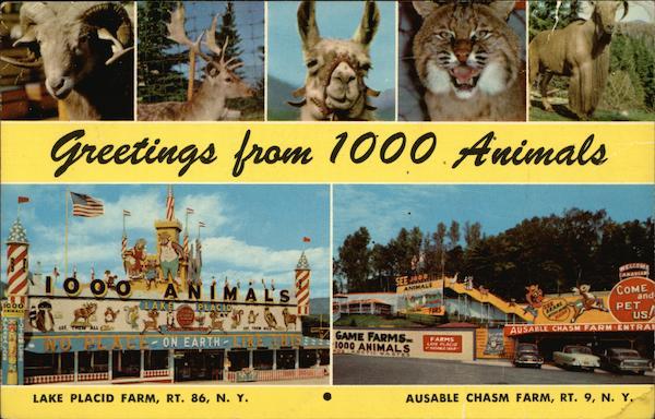 greetings from 1000 animals lake placid  ny
