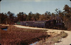 Sightseeing Trains Through Cranberry Bogs