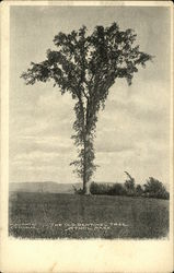 The Old Sentinel Tree