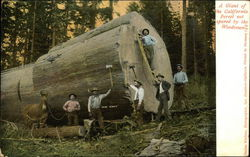 A Giant of the California Forest Not Speared by the Woodsmen
