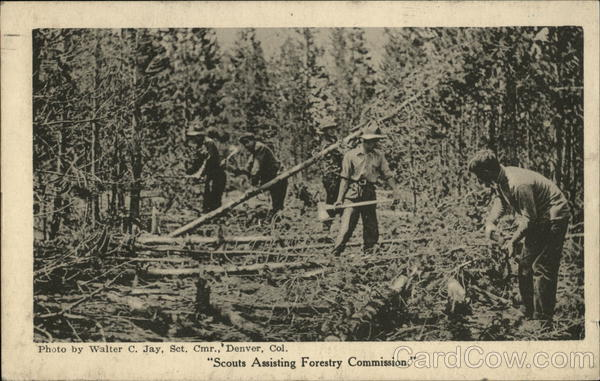 Scouts Assisting Forestry Commission Denver Colorado