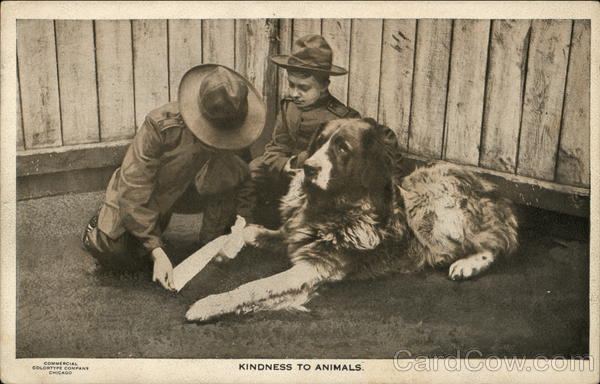 Kindness To Animals Boy Scouts