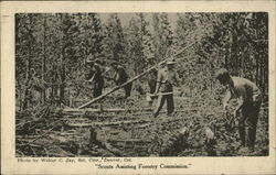 Scouts Assisting Forestry Commission