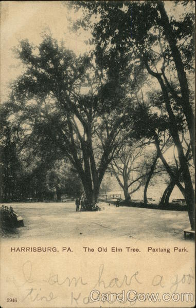 The Old Elm Tree, Paxtang Park Harrisburg Pennsylvania