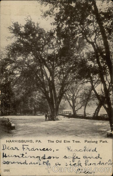 The Old Elm Tree. Paxtang Park Harrisburg Pennsylvania
