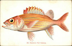 Hawaiian Fish Kalaloa