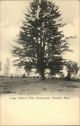 Holme's Pine, Holmesdale