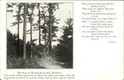 The Pines on Meeting House Hill