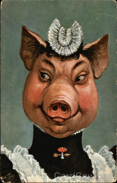 pig in maid uniform dressed animals postcard