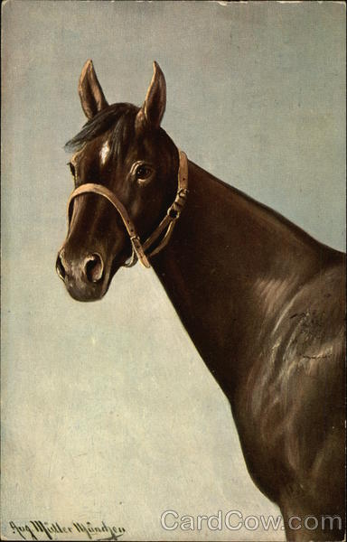 Brown horse with white diamond on forehead Aug Muller Mundjen