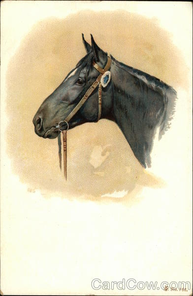 Head Portrait of a Black Horse with Bridle Horses