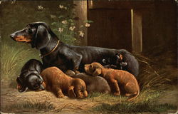 Mother Dachshund with puppies
