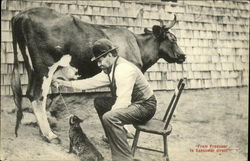 Man milking Cow into Cat's Mouth