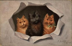 Three Kittens Looking through Torn Paper