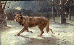 The Common Wolf