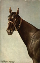 Brown horse with white diamond on forehead