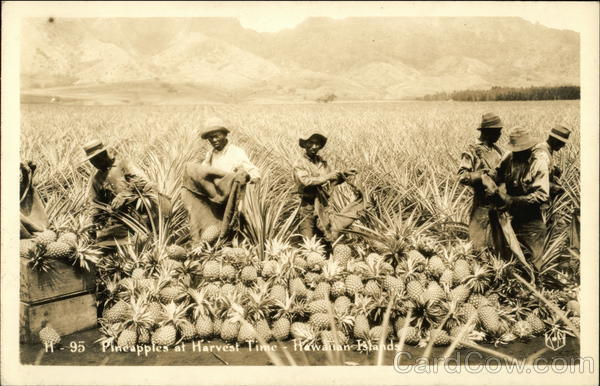 Black Men with Pineapples at Harvest Time Hawaii Black Americana