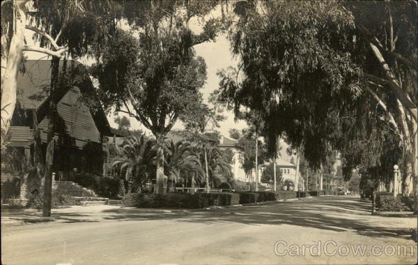 Tree-Lined Residential Street Beverly Hills California
