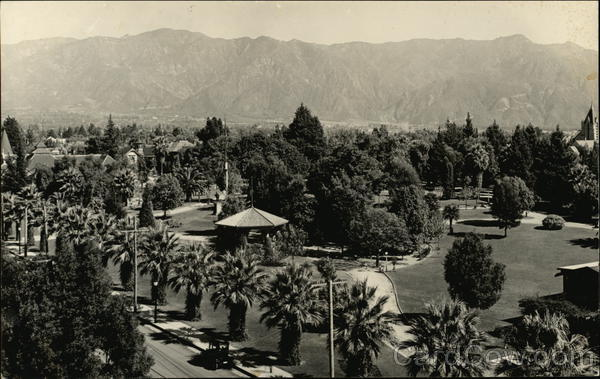 Palm Trees and Lawn in front of the Mountainside Palm Springs California