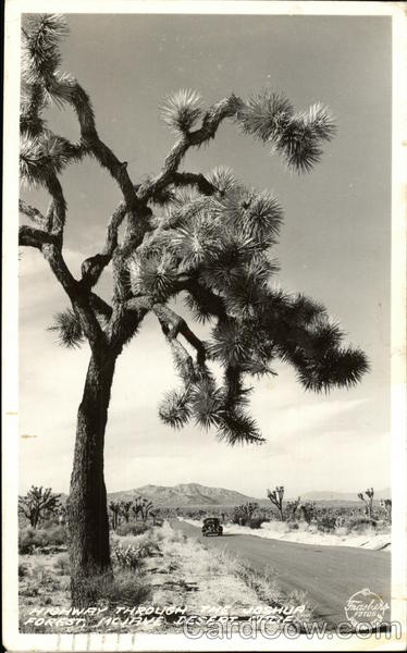 Highway through The Joshua Tree Forest, Mojave Desert California