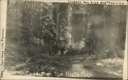 Boys in a Forest with Large Trees