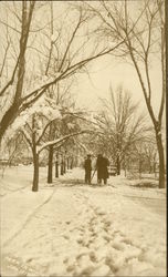 Park in Winter - January